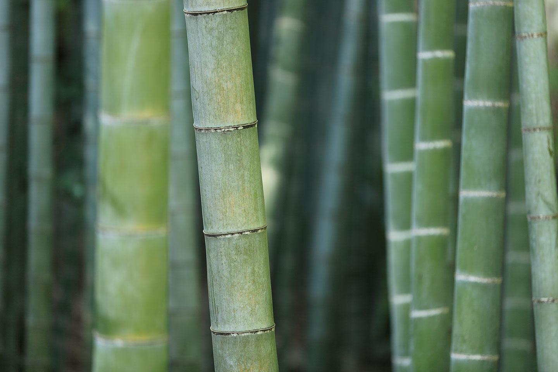 8Y8 bamboo apparel